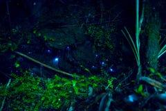 Изумительный червь зарева waitomo в пещерах, расположенных в Новой Зеландии Стоковое фото RF