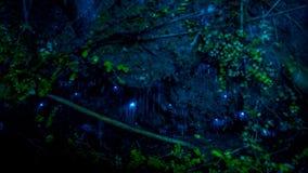 Изумительный червь зарева waitomo в пещерах, расположенных в Новой Зеландии Стоковые Изображения RF