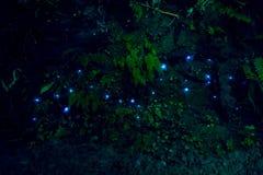 Изумительный червь зарева waitomo в пещерах, расположенных в Новой Зеландии Стоковые Фотографии RF