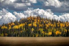 Изумляя гора сосен и сочные цвета осени деревьев березы и Aspen на пасмурный день в Dixie национальном Forrest стоковое изображение rf