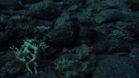 Изумляя заплыв рыб в Красном Море видеоматериал