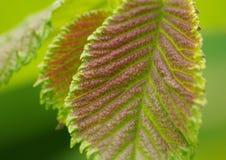 изумляя листья Стоковое Изображение RF