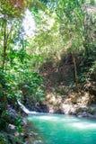 Изумляя небольшой спрятанный водопад на походе через сцену осени леса чудесную с папоротником, небольшим потоком и водой падая от стоковое изображение rf