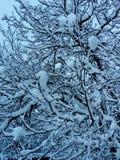 Изумляя сизоватый treetop в зиме стоковое фото rf