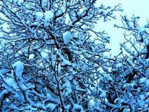 Изумляя сизоватый treetop в зиме стоковые фото