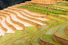Изумляя традиционная культура риса в террасных рисовых полях во Вьетнаме стоковая фотография