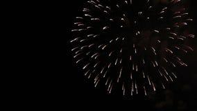 Изумляя шоу фейерверка Яркий брызгает цветков салюта против ночного неба o сток-видео