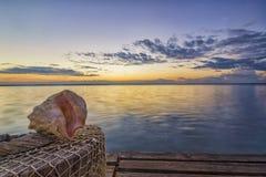 Изумляя seascape с seashell стоковые фото