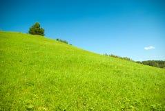 изумрудная трава Стоковое фото RF