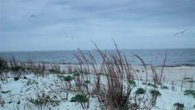 Изумрудные дюны побережья акции видеоматериалы