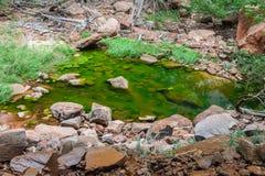 Изумрудный бассейн в национальном парке Сиона в Юте стоковое изображение rf