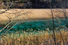 Изумрудный Green River в Jiuzhaigou, Китае Стоковая Фотография RF