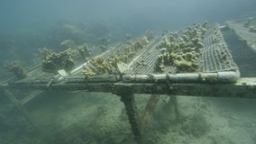 Изучающ кораллы под водой сток-видео