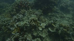 Изучающ кораллы под водой акции видеоматериалы