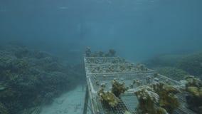 Изучающ кораллы под водой видеоматериал