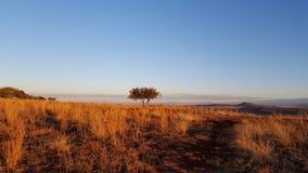 Из Африки Стоковые Фотографии RF