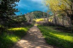 Из леса Стоковое Фото