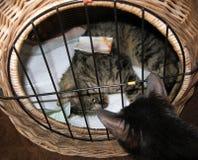 Излечите кот лежа в коробке стоковая фотография rf