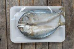 2 из испаренных рыб скумбрии в подносе пены Стоковая Фотография RF