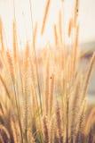 Излишняя флора Стоковая Фотография RF