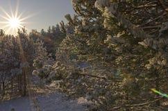 Излучающее солнце утра Стоковые Изображения RF