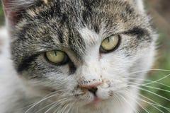 дикая кошка Стоковые Изображения