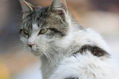 дикая кошка Стоковые Фото
