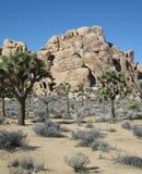 Иконический ландшафт пустыни с старой горной породой песчаника, деревьями Иешуа и поменянными родными заводами и кустарниками Стоковые Изображения RF