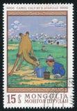 Икра верблюда Стоковое Фото