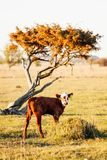 Икра деревом в Ã-земле Швеции Стоковые Фото