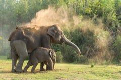 Икра слона Стоковое фото RF