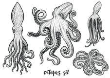 Иллюстрации вектора осьминога нарисованные рукой Черный эскиз гравировки изолированный на белизне Стоковые Изображения