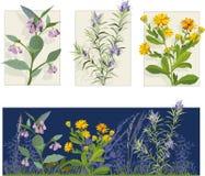 иллюстрации цветка иллюстрация штока