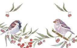 Иллюстрация акварели воробья handmade Стоковое Изображение RF