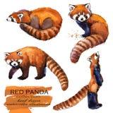 Иллюстрация акварели красной панды нарисованная рукой Стоковые Изображения RF