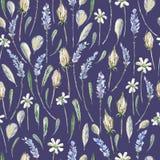 Иллюстрация акварели реалистическая флористическая картина безшовная prov Стоковая Фотография RF
