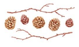 Иллюстрация акварели с конусами и хворостинами Элементы нарисованные рукой ботанические иллюстрация вектора