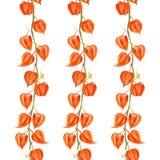 Иллюстрация акварели физалиса на белой предпосылке, vector безшовная картина, текстура дизайна флористического орнамента иллюстрация вектора