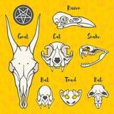 Иллюстрация анатомических или хеллоуина, черепа животного ведьмы Стоковые Изображения