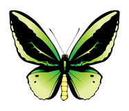 иллюстрация бабочки зеленая Иллюстрация штока