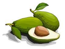 Иллюстрация вектора авокадоов зеленого цвета плодоовощ чертежа Стоковое Изображение RF