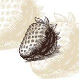 Иллюстрация вектора гравировки притяжки клубники стоковое изображение rf