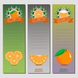 Иллюстрация вектора для зрелого апельсина цитрусовых фруктов Стоковое Фото