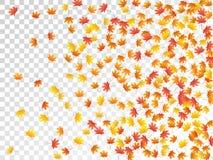 Иллюстрация вектора кленовых листов, листва осени на прозрачной предпосылке стоковая фотография