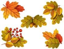 Иллюстрация вектора красочная осенних листьев дерева Стоковые Изображения RF
