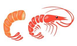 Иллюстрация вектора креветки иллюстрация штока