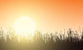 Иллюстрация вектора лужайки с швами травы, оранжевым небом и ris Стоковое Изображение RF