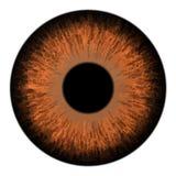 Иллюстрация вектора макроса радужки глаза Брауна иллюстрация штока