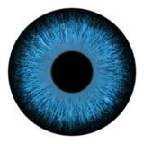 Иллюстрация вектора макроса радужки голубого глаза иллюстрация штока