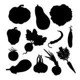 Иллюстрация вектора осени овощей зрелая Стоковое Изображение RF